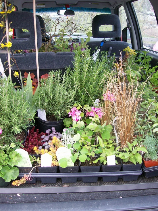 A trip to Groff's Nursery with my friend ~ we filled the car!