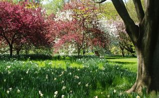 visit to chanticleer s orchard garden in may, flowers, gardening, The bulbs bloom in April and May The grass is allowed to grow until July when it is cut for hay By being managed in this way meadows are are easily improved with early flowers