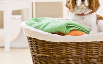 Four Ways to Do Laundry Faster