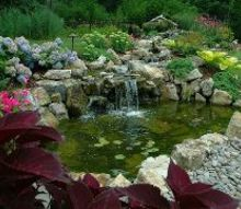 are you afraid to keep koi in your pond, ponds water features, Pond Ecosystems