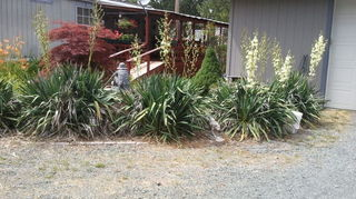 get the yucca out of my yard, gardening, landscape