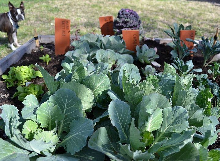 spring fever, gardening, One of our square foot gardens