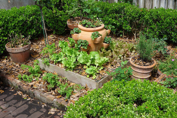A small rose garden was turned into a potager of stacked raised beds topped by strawberry pots.
