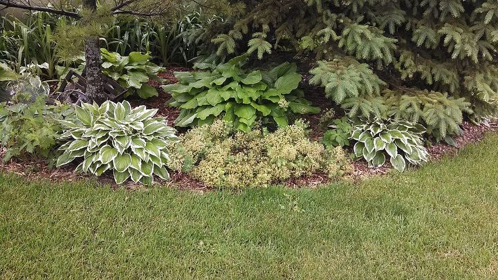 Many people mix there hostas with ground covers. Hostas seem to hold there own in these situations,