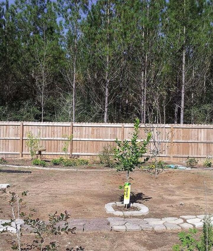 the back edging is a hypertufa mix.  This area is for butterflies and birds...