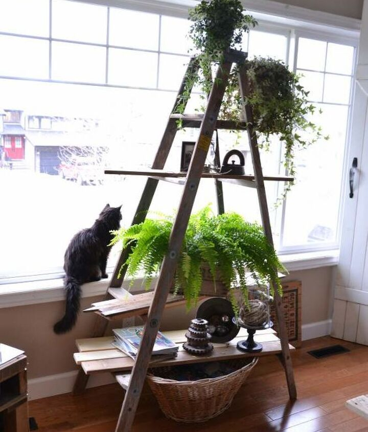 A ladder plus reclaimed wood creates the coolest plant stand ever. Cats love it too!