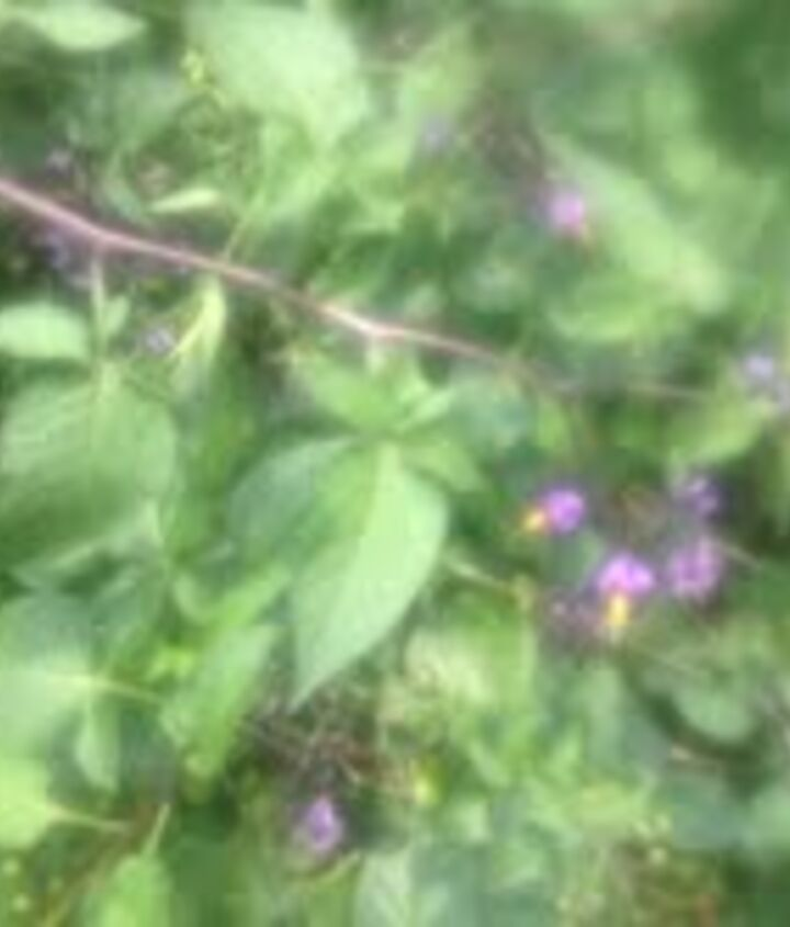 what is this, flowers, gardening