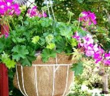 burlap a thrifty container liner, container gardening, crafts, flowers, gardening, repurposing upcycling, Burlap liners instead of coco liners