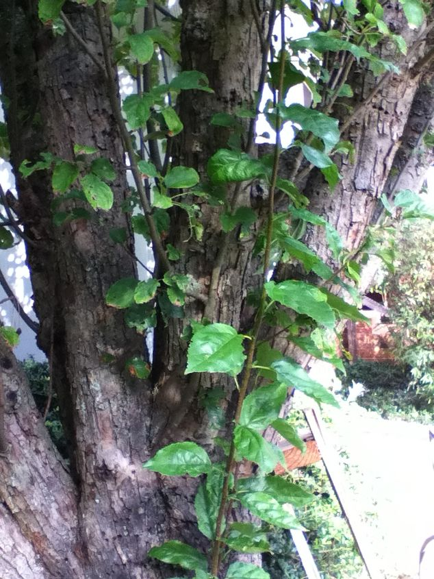 can anyone identify this tree i would appreciate it it is located very close to, gardening, 6 same tree