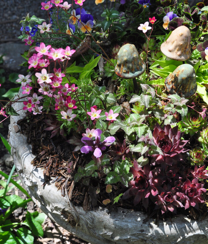 creating a garden in miniature, gardening