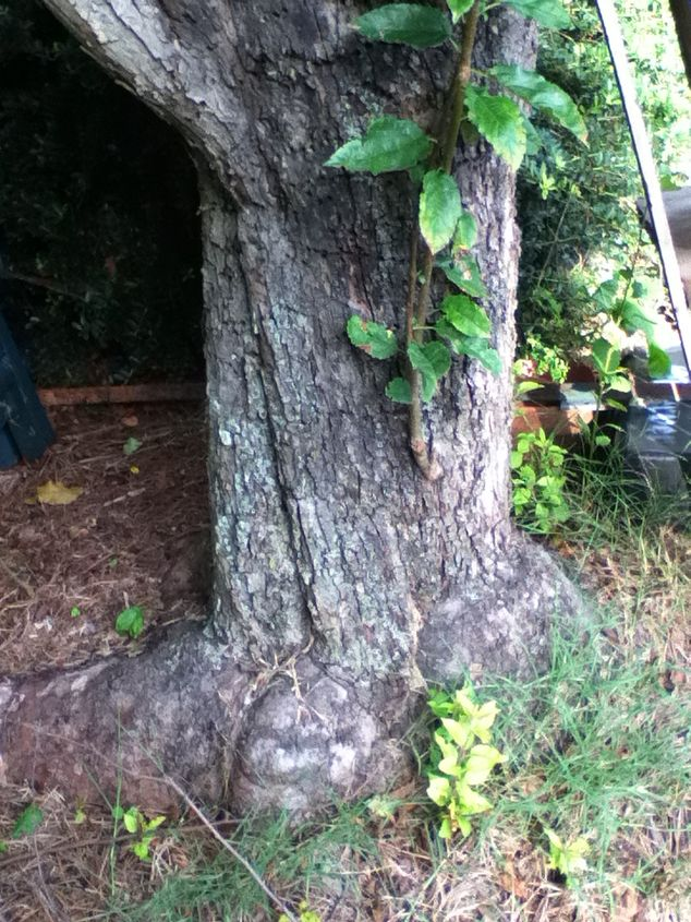 can anyone identify this tree i would appreciate it it is located very close to, gardening, 3 same tree