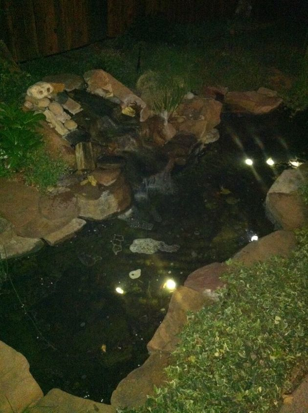 algae in my pond, ponds water features, My pond