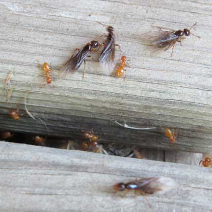 what are these insects, pets animals