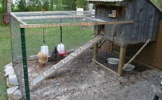 my new chicken coop made from old barnwood for henrietta amp greta, diy, pets animals