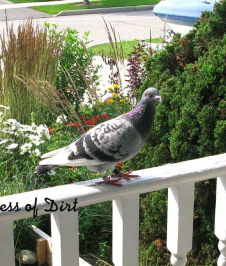 I came home one day to find this pigeon waiting at the front door!