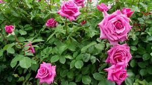 tip, flowers, gardening