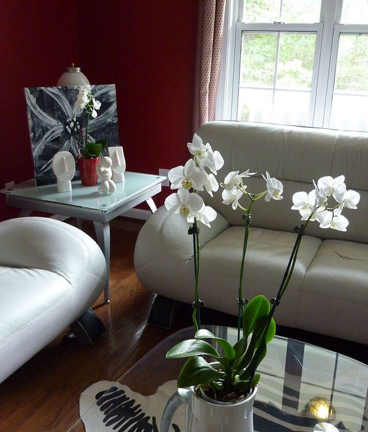Orchids in the Living Room