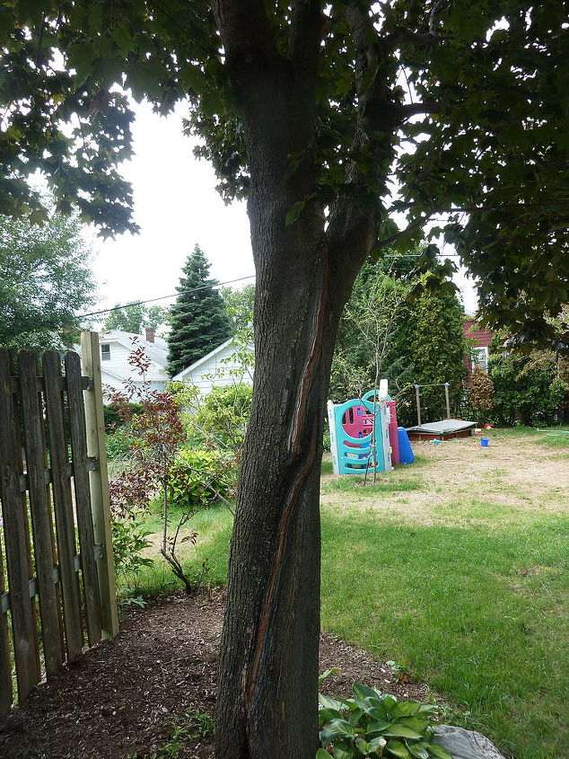 is this red maple ok, gardening