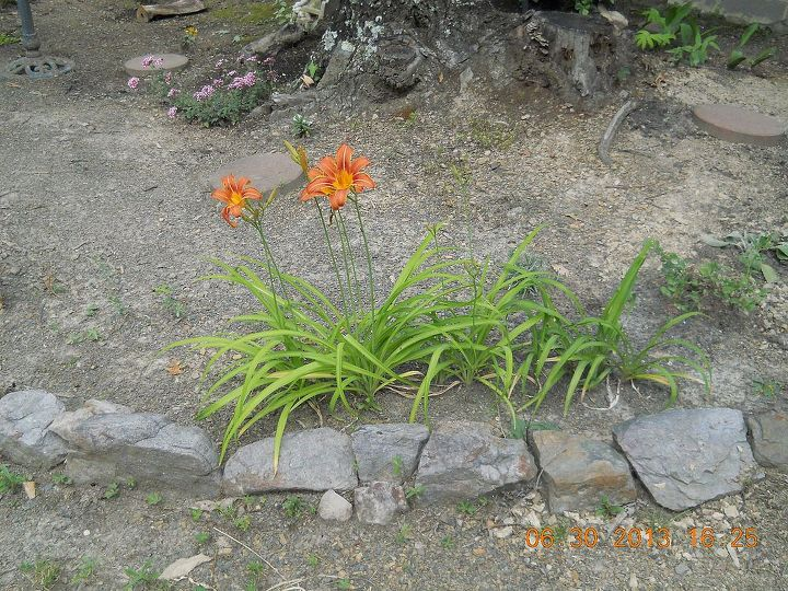 add some pretty orange Day Lilies