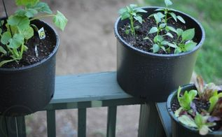 tips for container gardening, container gardening, gardening, Use the railing to elevate plants