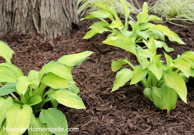 10 rules every homeowner should follow when landscaping, landscape