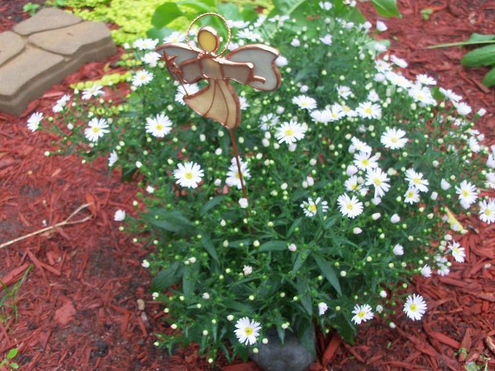 white in the garden, flowers, gardening, hydrangea, white asters so dainty