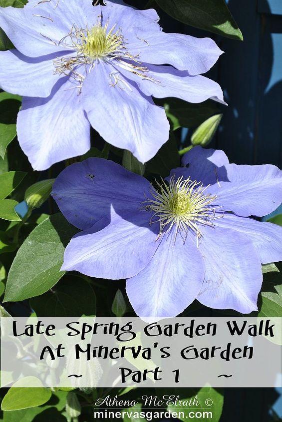 late spring garden walk at minerva s garden part 1, gardening
