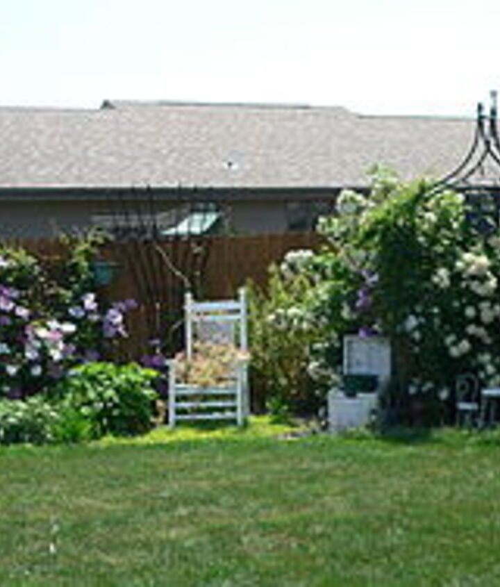 Front view of yard, clematis & viburnum