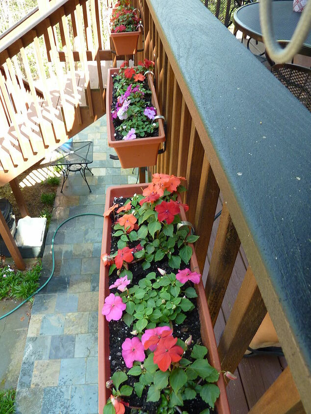 Impatiens- we have a shady deck