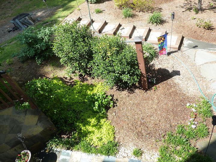 Gardenias, creeping jenny, hydrangea, clematis