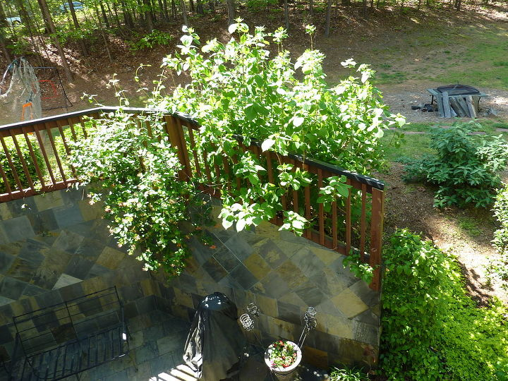 Hydrangea, honeysuckle, clematis, creeping jenny, gardenias, TODAY!