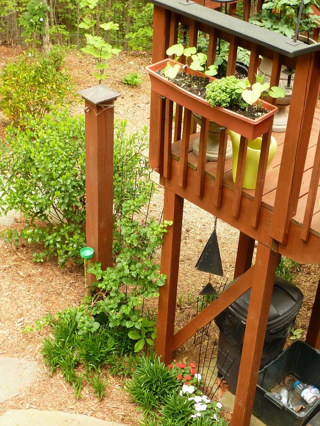 Green beans, climbing hydrangea , gardenia, monkey grass and impatiens