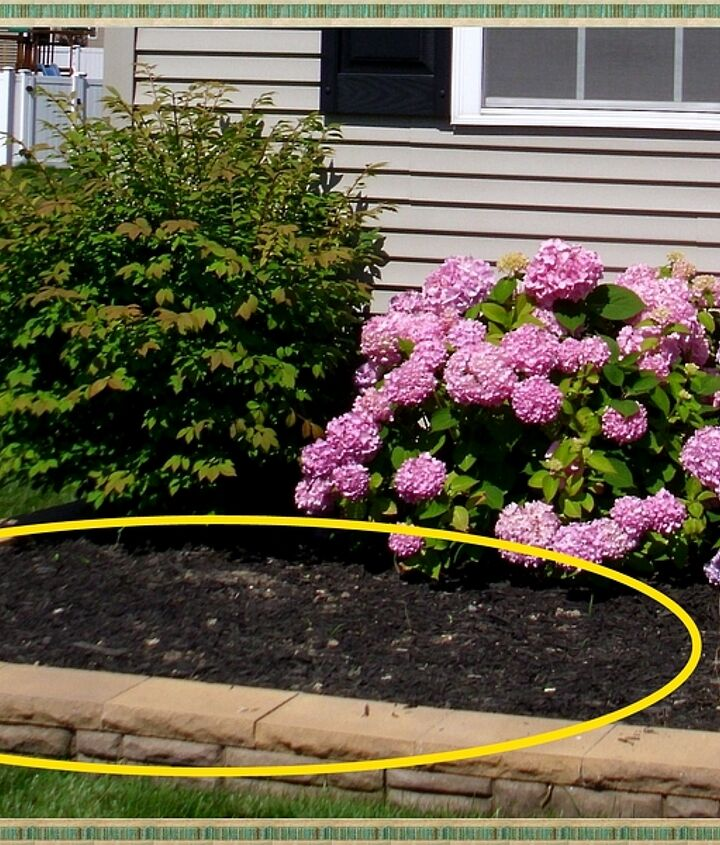 candytuft an easy year round garden beauty, flowers, gardening