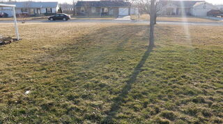 lawn question, landscape, outdoor living, Here is were the edge of the affected area just to the left of the tree