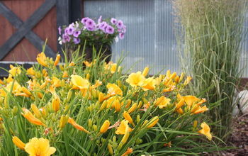 how to create beautiful landscaping without spending a lot of cash, container gardening, diy, flowers, gardening, landscape, perennial, Landscaping can make all the difference