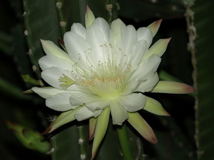 a close up of the flower