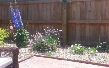 patio garden 2013, gardening, patio