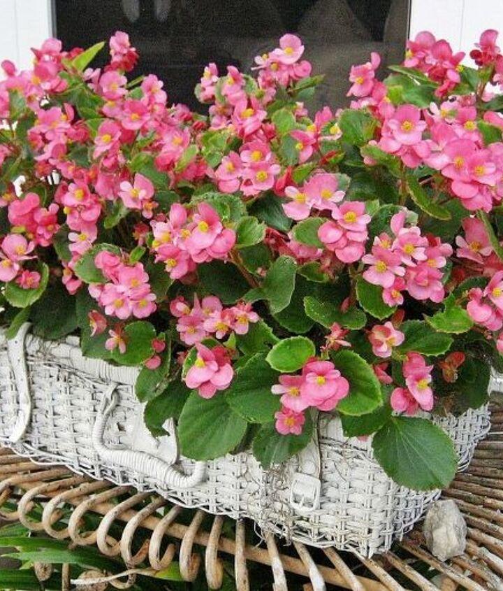 My shabby picnic basket planter...my begonias love it! Tutorial on my blog.