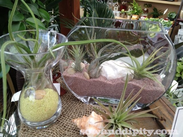 Find cool glass bowls or jars, add sand and shells and you can place these anywhere for an immediate 'green' decor accent