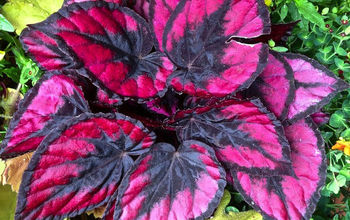 Is Your Heart in the Garden? Try These Heart-Shaped Plants...