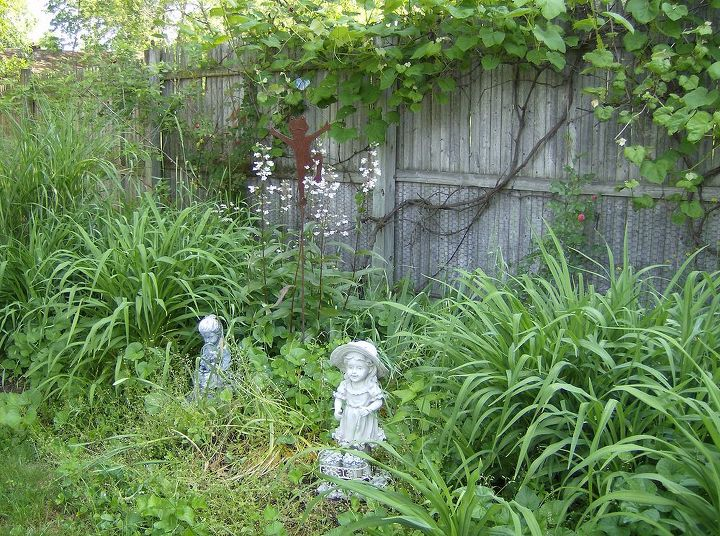 back yard fence with grapes and roses and flowers, oh my !