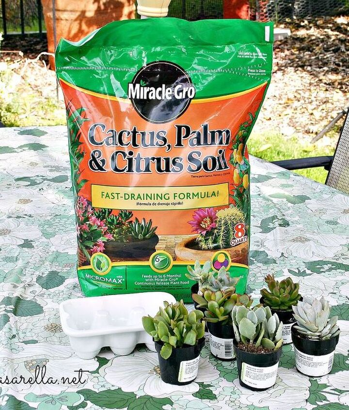 Cactus soil is important when planting succulents in a small space with no drainage.
