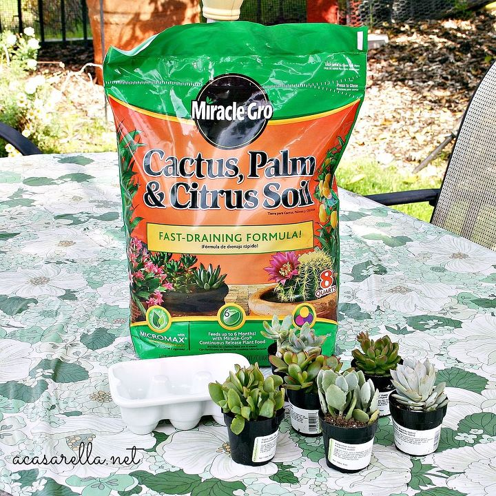 This easter hostess gift keeps on giving hometalk this easter hostess gift keeps on giving gardening succulents cactus soil is important negle Images