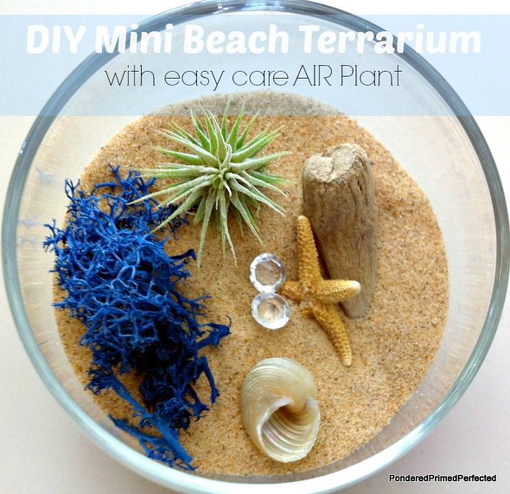 A wine glass (stemless in this case) some sand, an easy care air plant and a few fun beachy accessories make the cutest little terrarium!