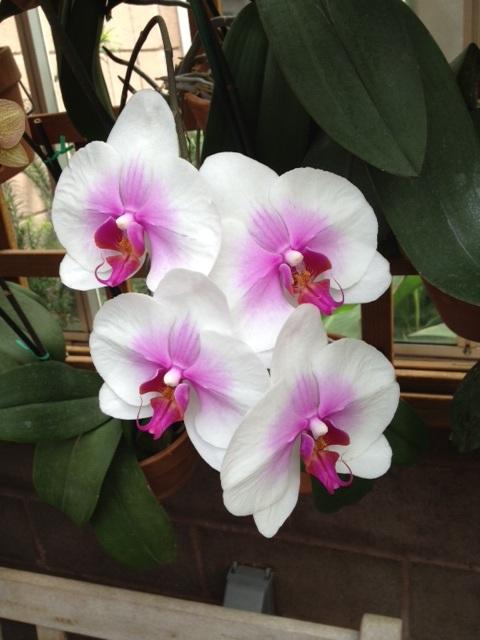 photos from the atlanta botanical garden, flowers, gardening