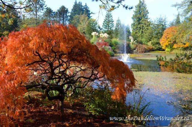 Livingstone Lake at VanDusen Botanical Gardens in Vancouver.