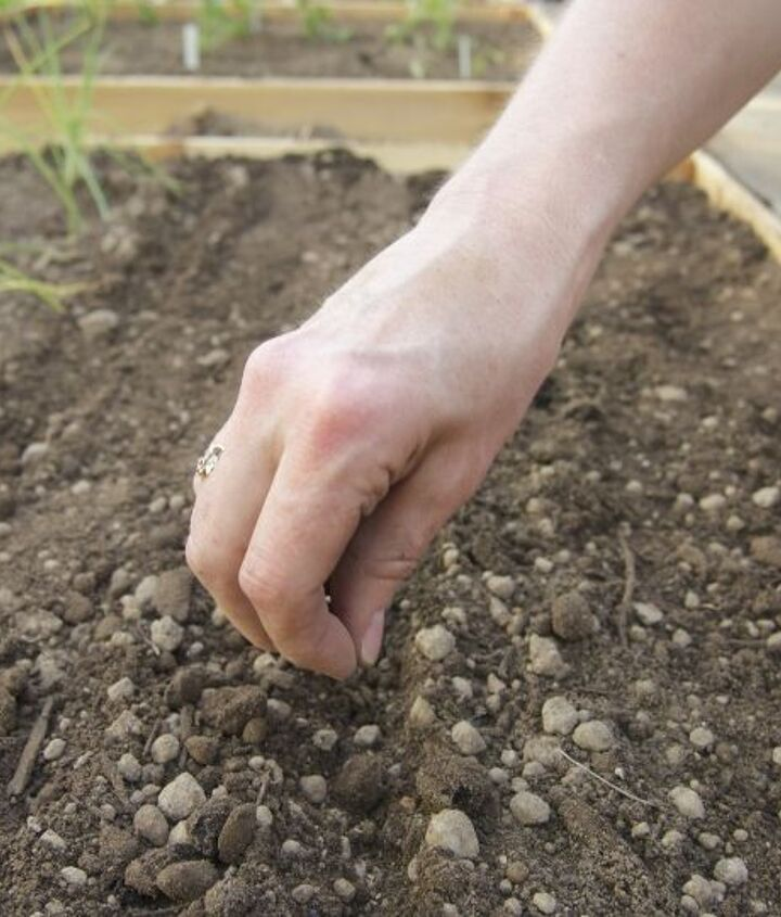 We put seeds and starts into our amended soil.