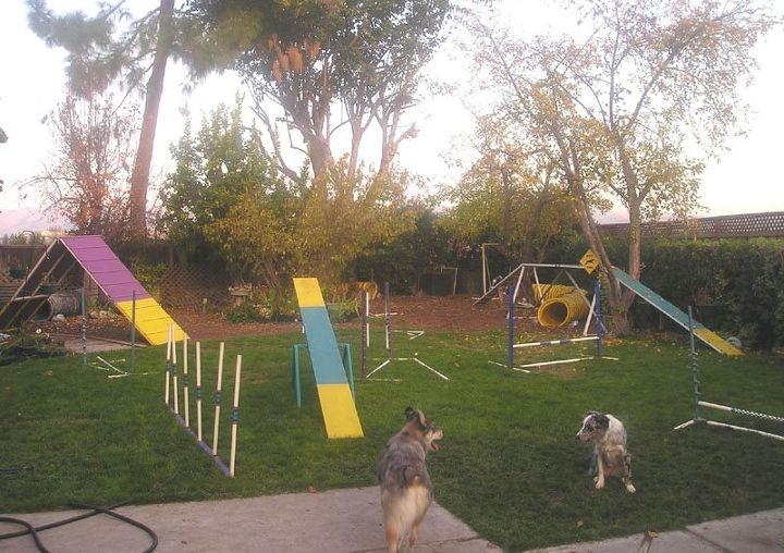 a makeshift obstacle course teaches trust, obedience and is fun