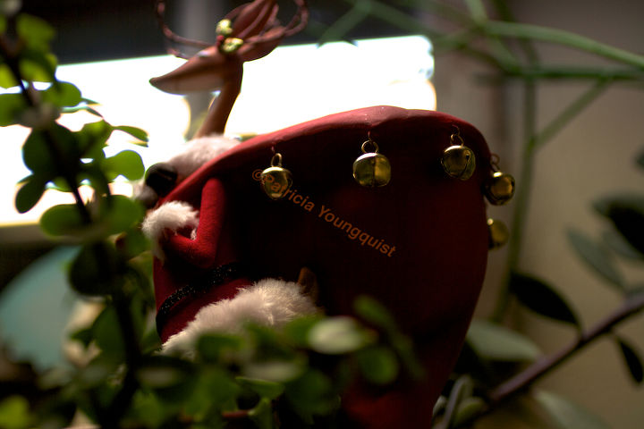 "Solo photo-op of a 2011 visitor to my indoor succulent garden who spoke of ""the reindeer"" effect @  http://thelastleafgardener.tumblr.com/post/14169763962/i-think-there-should-be-something-in-science"