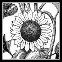 SunflowerHugs